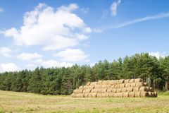 Wheat Haystacks Royalty Free Stock Photo