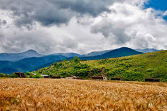 Wheat heads on a field with mountains on a background. In rural area Stock Photos
