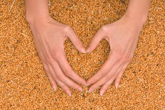 Wheat heart Royalty Free Stock Photos