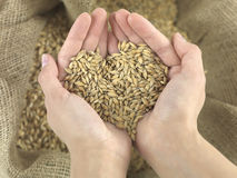 Wheat heart Stock Images