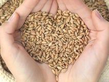 Wheat heart Stock Image