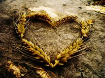 Wheat heart - summer love stock photos