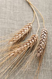 Wheat on a hessian royalty free stock photography