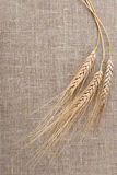 Wheat on a hessian royalty free stock photo