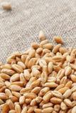 Wheat on a hessian. Grain of the wheat on a hessian royalty free stock photos