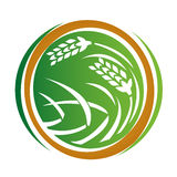Wheat icon Stock Photo