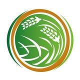Wheat icon. White background,  illustration Stock Photo