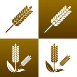Wheat icon, elements for design. Icon set. Natural bread and similar studies can be used IN spike icon drawings Royalty Free Stock Image