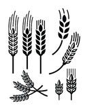 Wheat icon Royalty Free Stock Photography