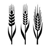 Wheat icon Stock Photos