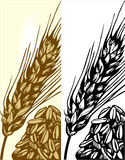 Wheat illustration Royalty Free Stock Photography