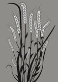 Wheat. Illustration of wheat ears with leaves black and white Stock Photos