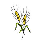 Wheat illustration. Ears of wheat illustration on white background Royalty Free Stock Photo