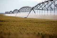Wheat irrigation. Color shot of an irrigation equipment on a wheat field Stock Image
