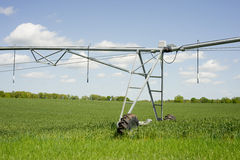 Wheat Irrigation. Wheat field with irrigation equipment in spring stock photo
