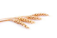 Wheat isolated Stock Photography
