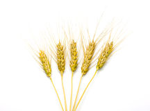 Wheat isolated. On white background Stock Images