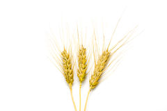 Wheat isolated. On white background Stock Photos