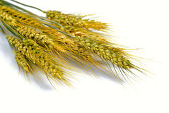 Wheat isolated Royalty Free Stock Photos