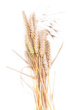 Wheat isolated. On white background Stock Photo