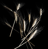 Wheat isolated on black Stock Photo
