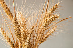 Wheat isolated Royalty Free Stock Images