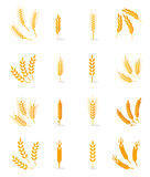Wheat Isolated On White Background. Royalty Free Stock Photography