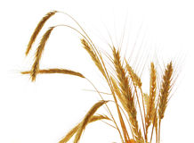Wheat isolated over white background Royalty Free Stock Photography