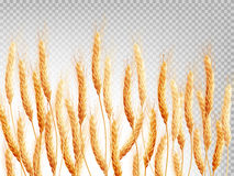 Wheat isolated on a transparent background. EPS 10. Vector file included Royalty Free Stock Photos