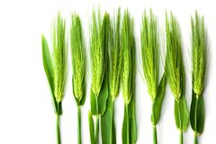 Wheat isolated on white Stock Image
