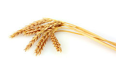 Wheat isolated on white Stock Photos