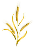 Wheat isolated on white. Three ears of wheat isolated on white royalty free illustration