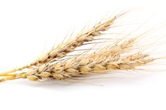 Wheat isolated on white. Food ingredient Stock Photo