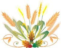 Wheat isolated on white. Royalty Free Stock Photo