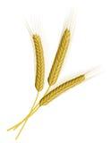 Wheat isolated on white Stock Photos