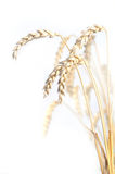 Wheat isolated on white Stock Images