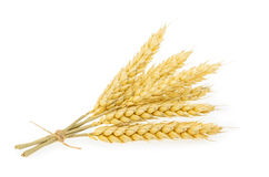 Wheat isolated on white. Stock Photos