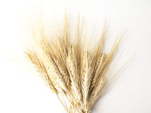 Wheat isolated on white Stock Photo