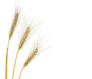 Wheat isolated on white background Stock Photography