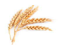 Wheat isolated Royalty Free Stock Photography