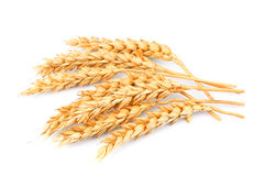 Wheat isolated Stock Photo