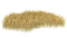 Wheat isolated on white close up Royalty Free Stock Photo