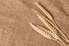 Wheat on jute Royalty Free Stock Photography