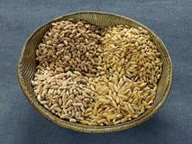 Wheat,kamut and spelt Stock Photos
