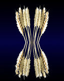 Wheat kernels Royalty Free Stock Photo