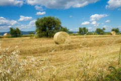Wheat land with bales of hay Royalty Free Stock Photos