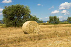 Wheat land with bales of hay Royalty Free Stock Photo
