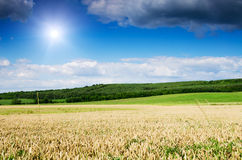 Wheat land Royalty Free Stock Photography