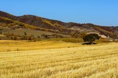 Wheat land Stock Photos