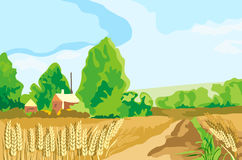 Wheat landscape. Whith ear and house Stock Photos
